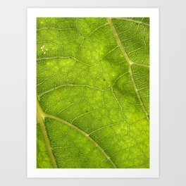 Sunflower leaf Art Print