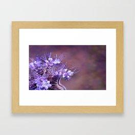 Purple Tips Framed Art Print