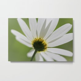 Daisy by Mandy Ramsey Metal Print