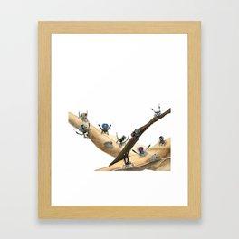 Maratus Mating Displays 1 Framed Art Print