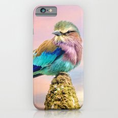 Lilac breasted roller at sunset Slim Case iPhone 6s