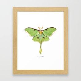 Luna Moth (Actias luna) II Framed Art Print