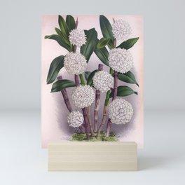 Vintage White Orchid Dendrobrium Purpurem Candidulum Lindenia Collection Mini Art Print