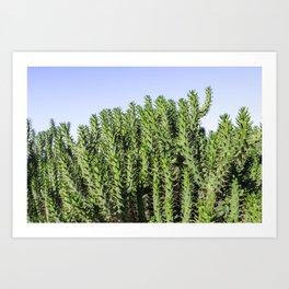 Cactus Photography - Green Cactus Decor - Cacti Art Art Print