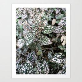 10  | Plants Photography | 200630 | Art Print