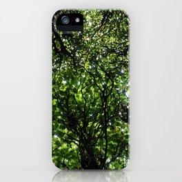 umbrella of trees iPhone Case