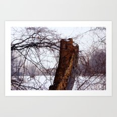 Stump in Field Art Print