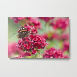 Red flowers and a beautiful butterfly Vanessa atalanta Metal Print