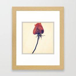 Rose of History Framed Art Print