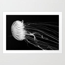 Black and white jellyfish Art Print
