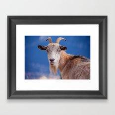 Goat - tongue out 8078 Framed Art Print