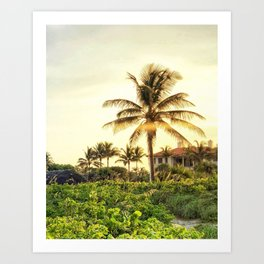 Palm Beach golden hour Art Print