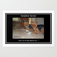 Yorkshire Terrier - Attitude is Everything Art Print