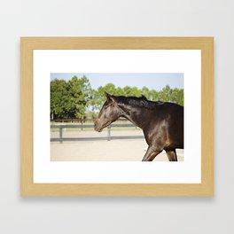 Shimmering Bubba Framed Art Print