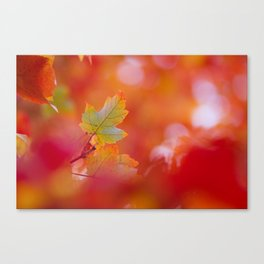Green in a Sea of Red Canvas Print