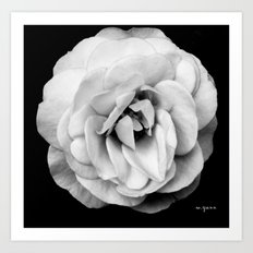 Black and White Flower Photography Art Print