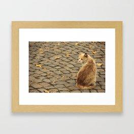 Street Cat Framed Art Print