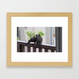 Love Birds in Hawaii Framed Art Print