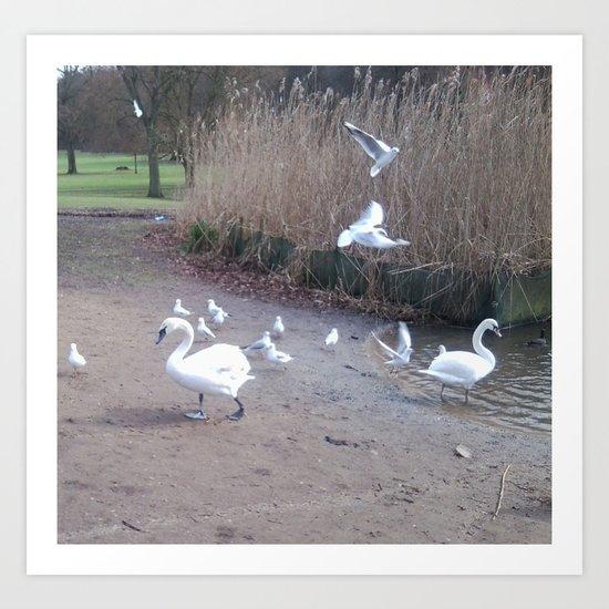 Swans 3 Art Print