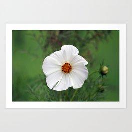 White Wildflower macro Art Print