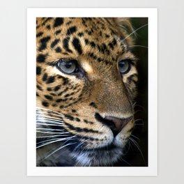 Chinese Panther Art Print