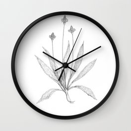 Ribwort Wall Clock