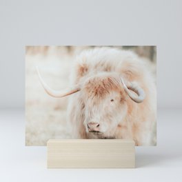 Blond Scottish Highland Cow Photo | Animal Photography | Scottish Highlander Mini Art Print