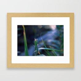 Wildflower IV Framed Art Print