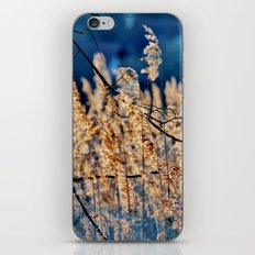 My blue reed dream - photography iPhone & iPod Skin