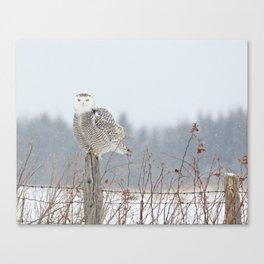 Snow falling on Miss Snowy Canvas Print