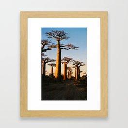 Alley of Baobabs Framed Art Print
