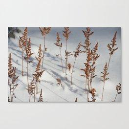 Astilbe Canvas Print