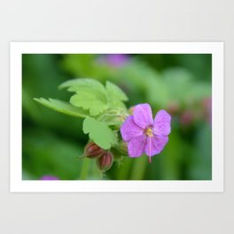 Tiny Purple Flowers Art Print