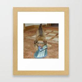 Little puppy biting a sandal Framed Art Print
