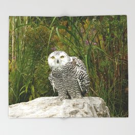 Curious Snowy Owl Throw Blanket