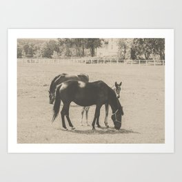 Horses and Foal Art Print