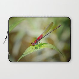 Red Damselfly Dragonfly Laptop Sleeve