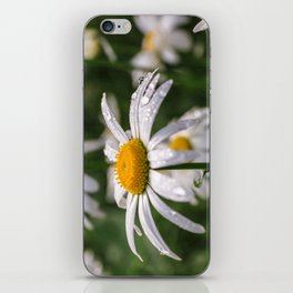 White daisy with rainy droplets iPhone Skin