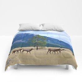 Bull Elk with his Harem Comforters