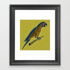 Macaw on a Perch Framed Art Print
