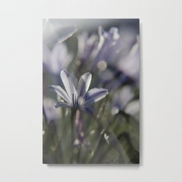 Quiet Splendor Metal Print
