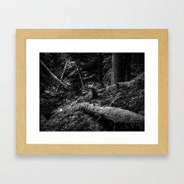 Missisquoi River in Vermont - 3 BW Framed Art Print