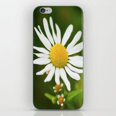 Wild Daisy iPhone Skin