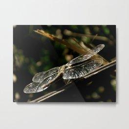 Dragonfly 01 Metal Print