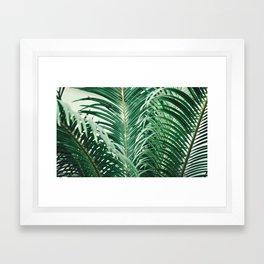 Fresh Paradise (Tropical Palm Tree Leaves Leafs) Framed Art Print