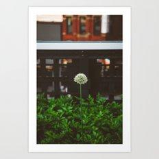 New York Garden Art Print