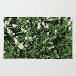 green/white Rug