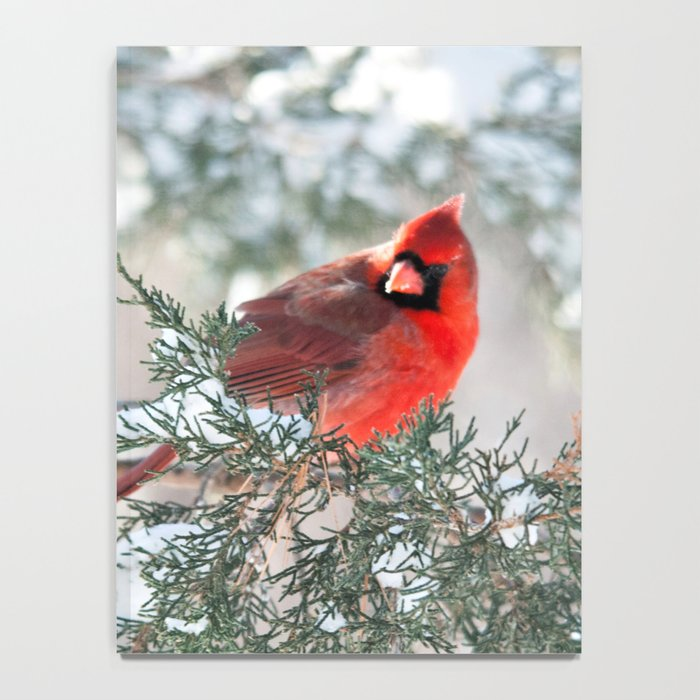 Remembering.... (Northern Cardinals) Notebook