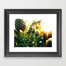 Thistle n Sun Framed Art Print