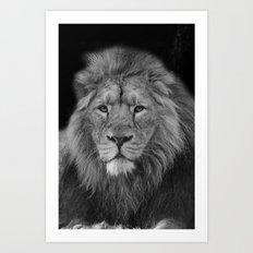Asiatic Lion Art Print